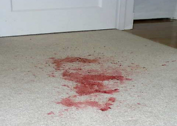 Blood Spills on Carpeted Floors